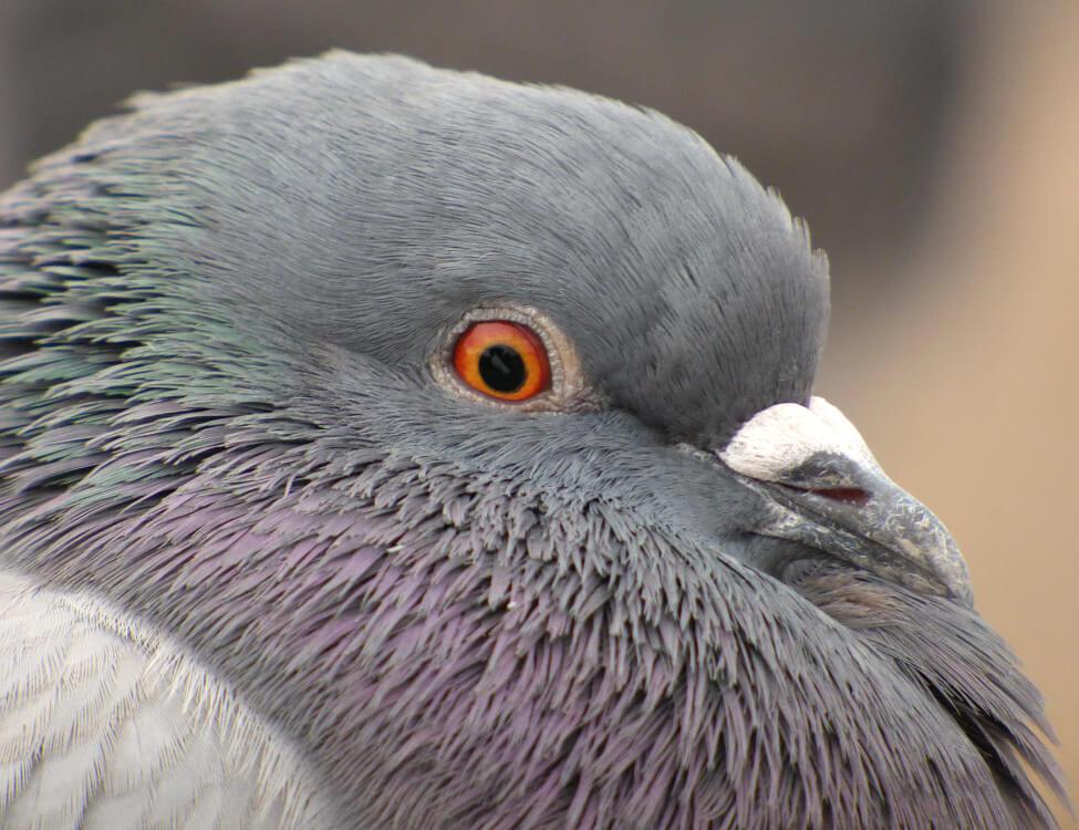 Birds, HVAC and Health Dangers??
